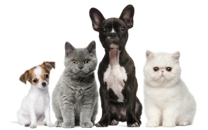 Group of dogs and cats, sitting, white background.